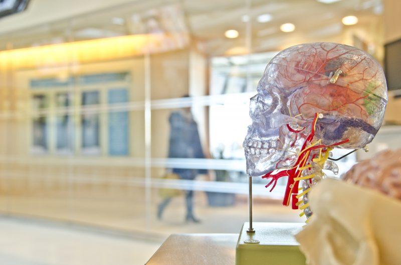 Build_a_better_brain